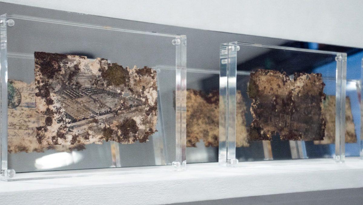 Cartes postales avec mousse végétale, lors de la Biennale de l'Image Tangible