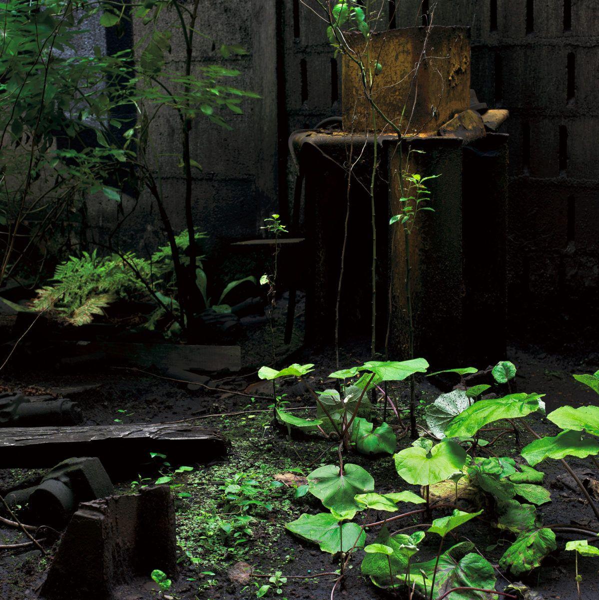 Tiers paysage, Mousse, végétal, nature, Gilles Clément