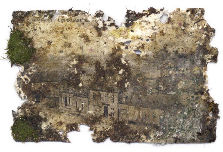 Tiers Paysage, Gilles Clément, POCTB, mousse, carte postale