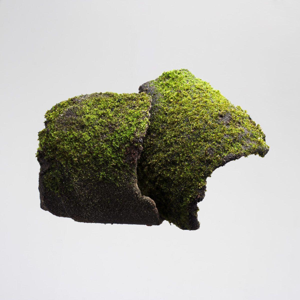 Tiers paysage, Mousse, prélèvement, Gilles Clément