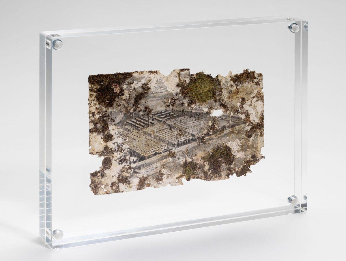 Tiers Paysage, Gilles Clément, POCTB, mousse